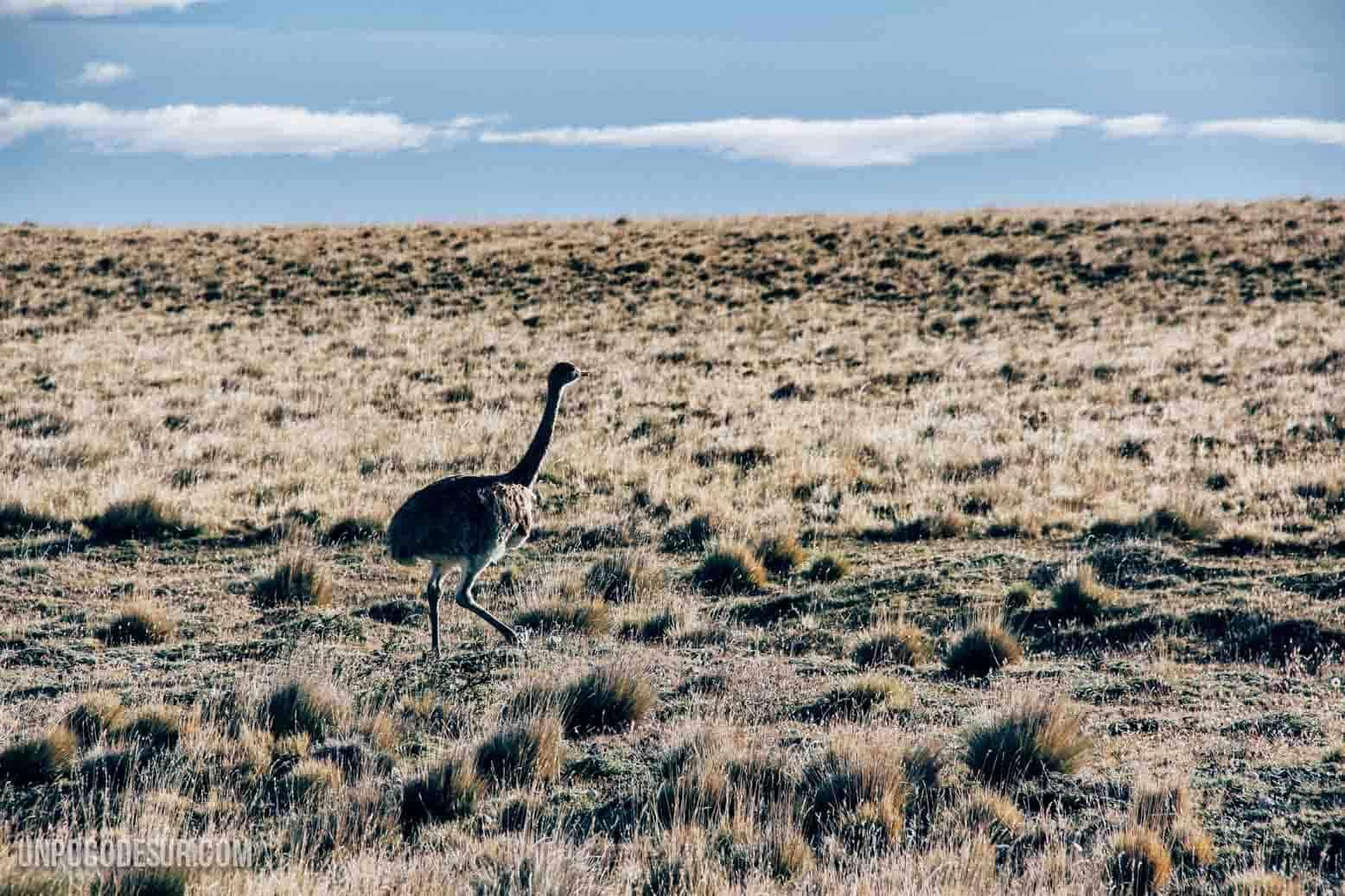 Animales Patagonia