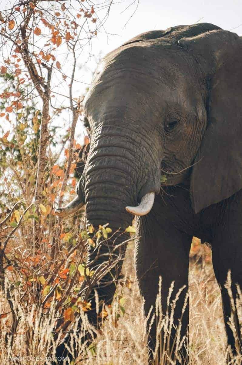 Elefantes en el Parque Kruger